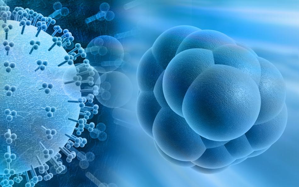 Цитомегаловирус (цмв): что это за инфекция у детей и взрослых