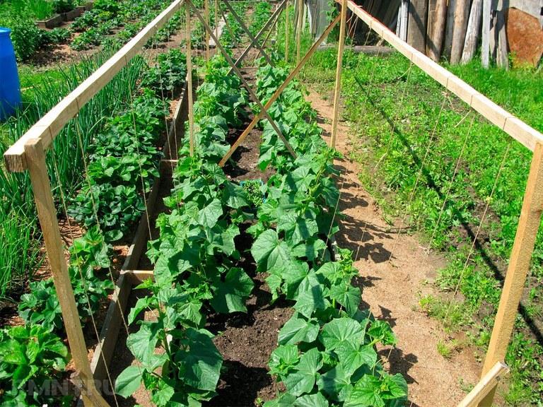 Карбамид для томатов: полезное удобрение для высокого урожая
