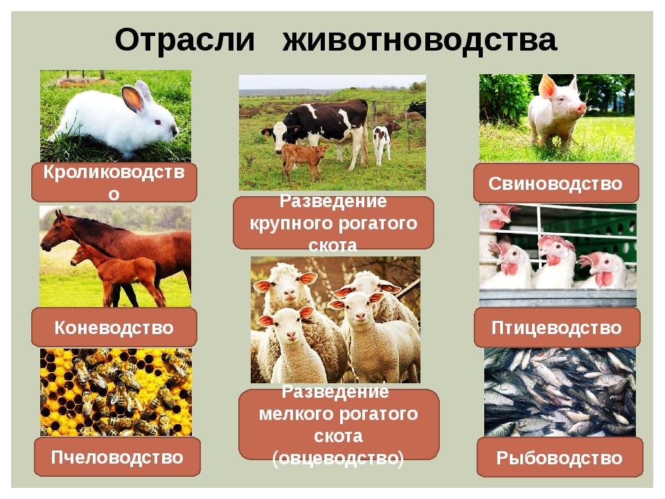 Животноводство россии: основные виды и перспективы