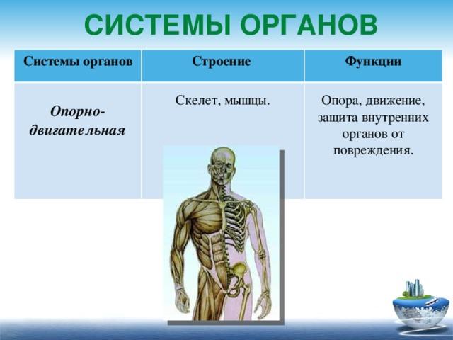 Что такое система органов?
