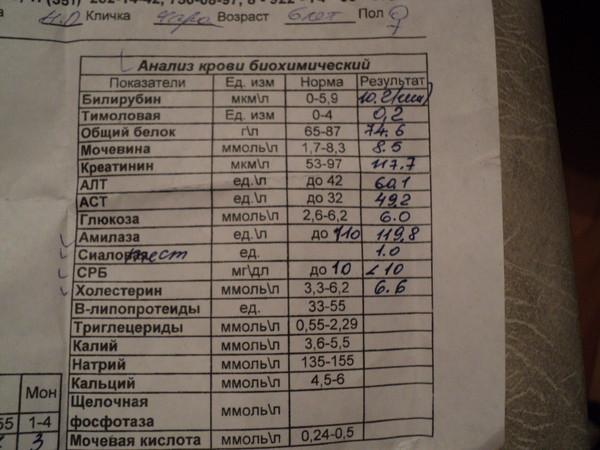 Анализ крови срб: расшифровка, норма, причины отклонений