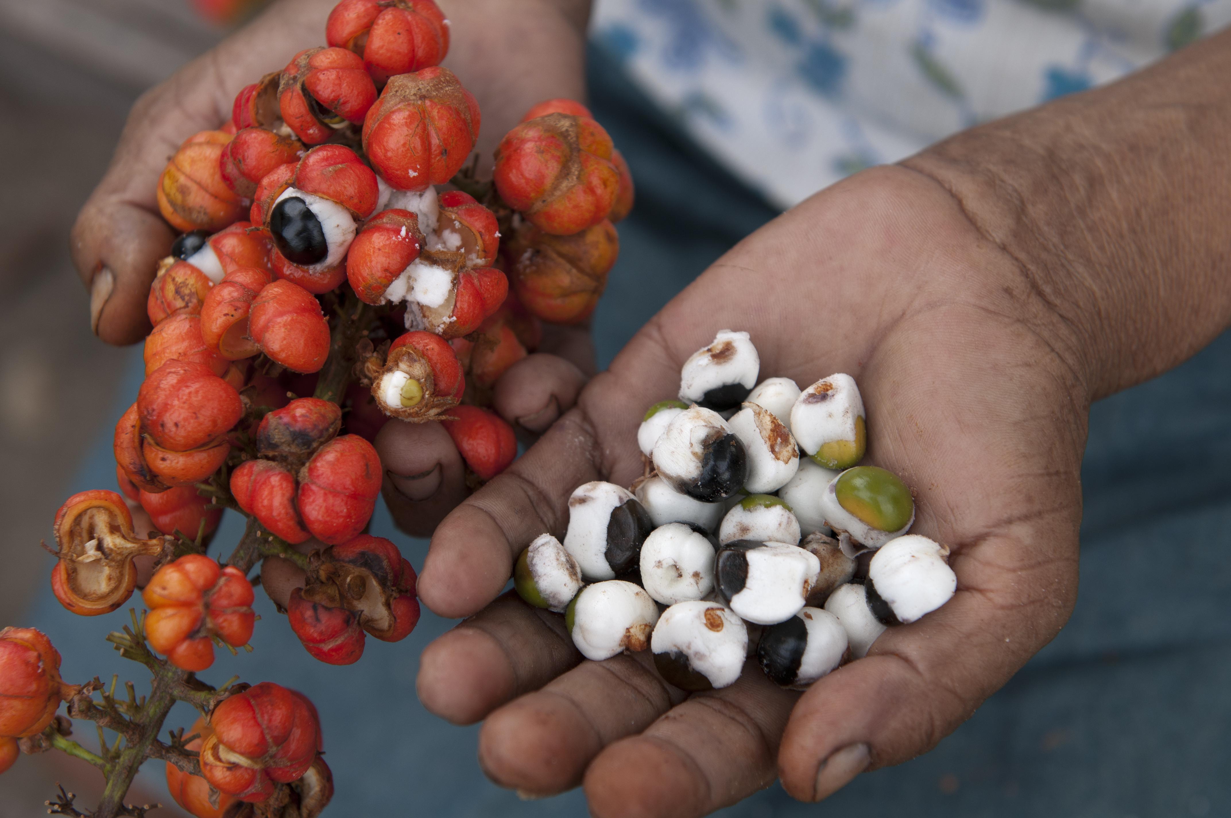 Гуарана: польза и вред, применение и отзывы
