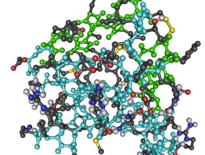 Гормоны: как работает эндокринная система в человеческом теле?