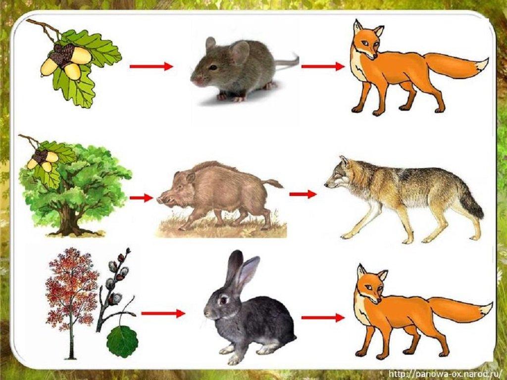 Пищевые цепи и пищевые сети: в чем разница?