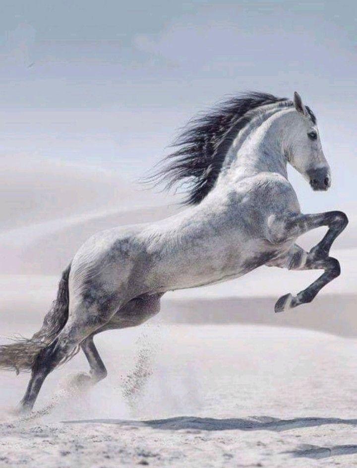 Прыгающие кони | забавные головоломки
