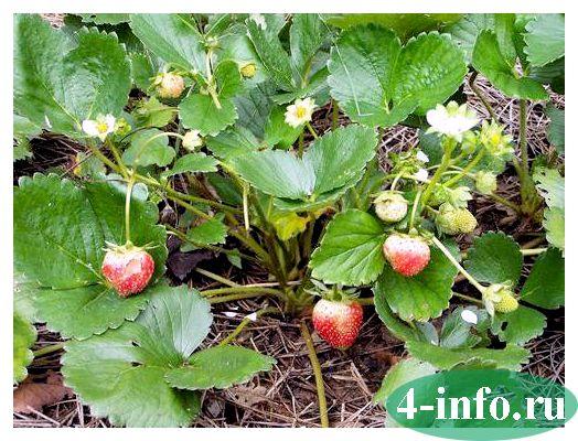 Пищевые культурные растения - сад и огород