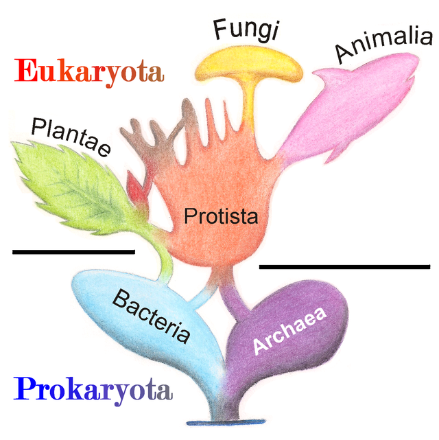 Многообразие клеток. прокариоты и эукариоты / справочник :: бингоскул