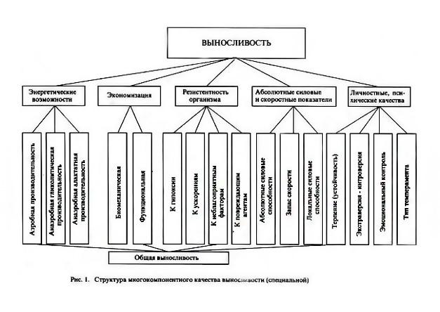 Выносливость (физическое качество), методы развития  |  krok8.com - фундаментальная стратегия развития