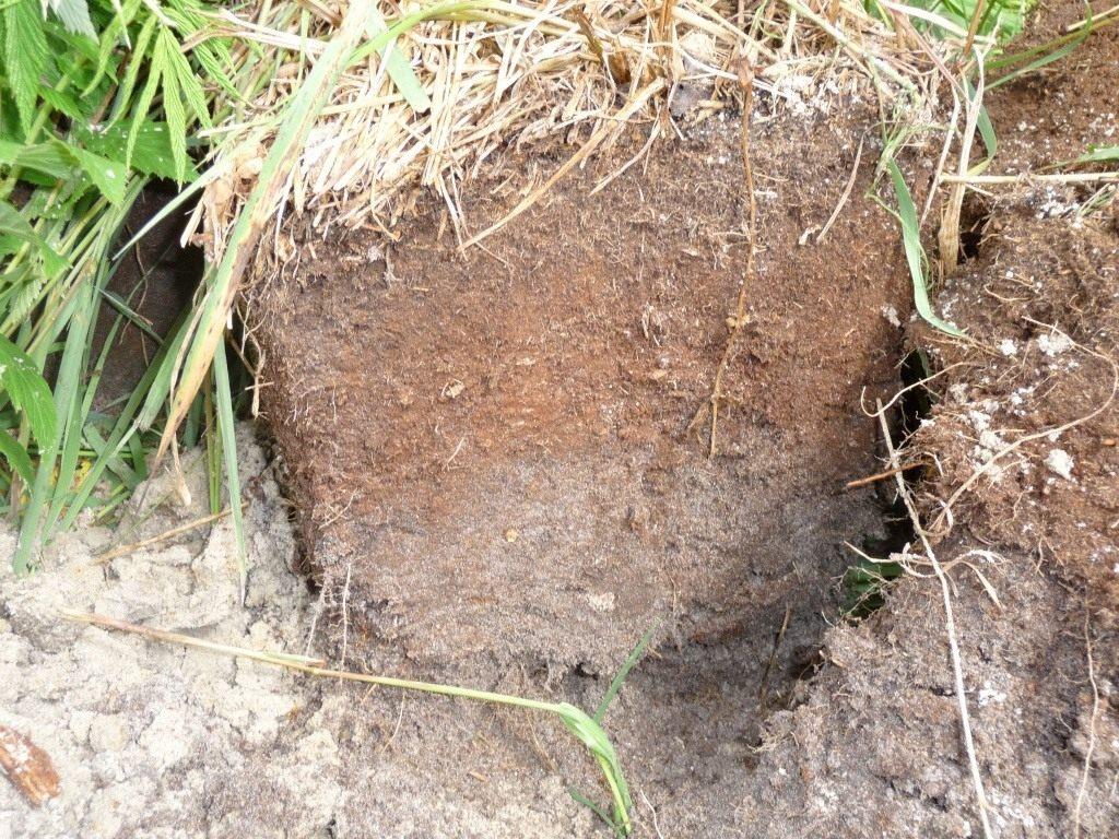 Что такое плодородие почвы