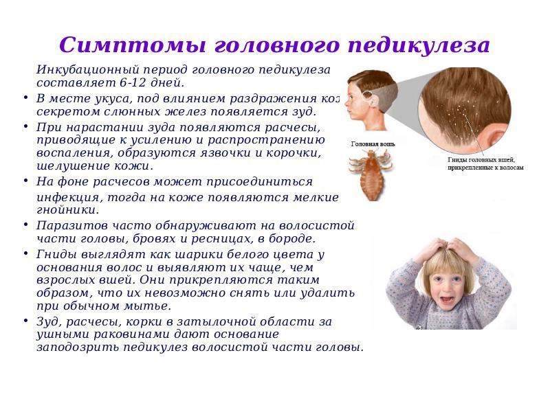 Педикулез (взрослые, дети): виды вшей, от чего появляются вши, симптомы, осложнения, диагностика, лечение (препараты, народное лечение), профилактика