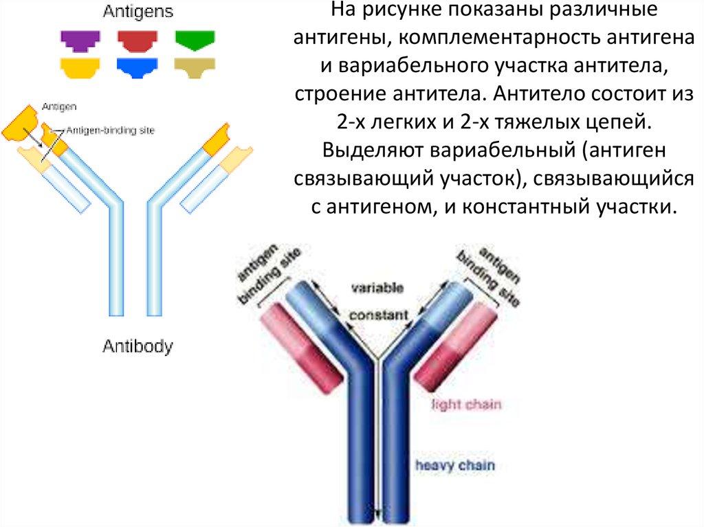 Антиген — википедия с видео // wiki 2