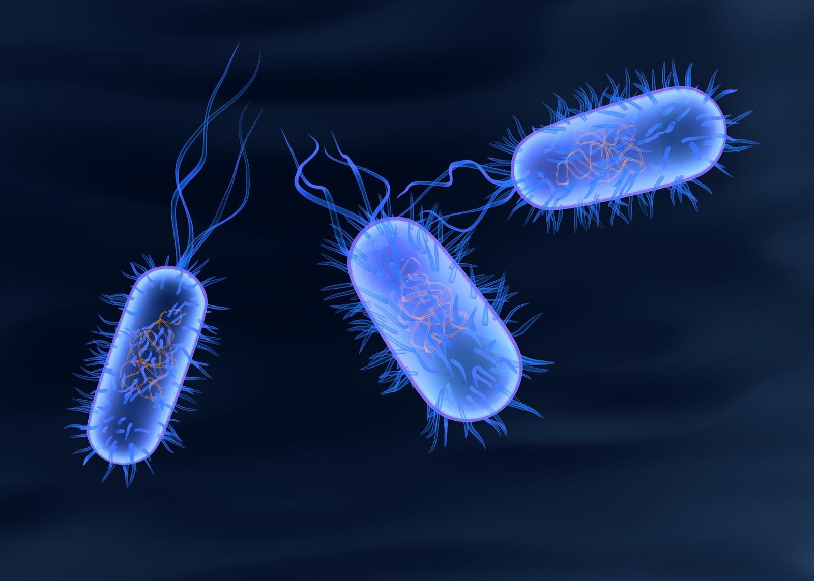 Кишечная инфекция: сальмонеллез - симптомы и лечение
