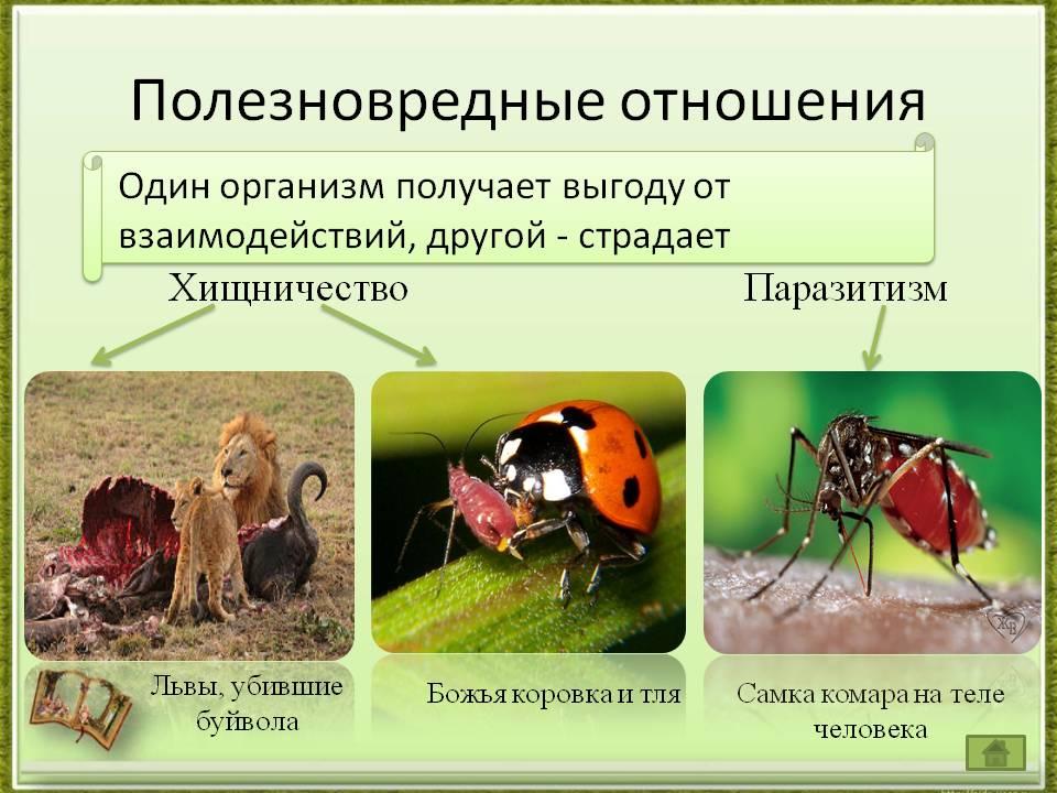 Что такое хищничество? основные характеристики