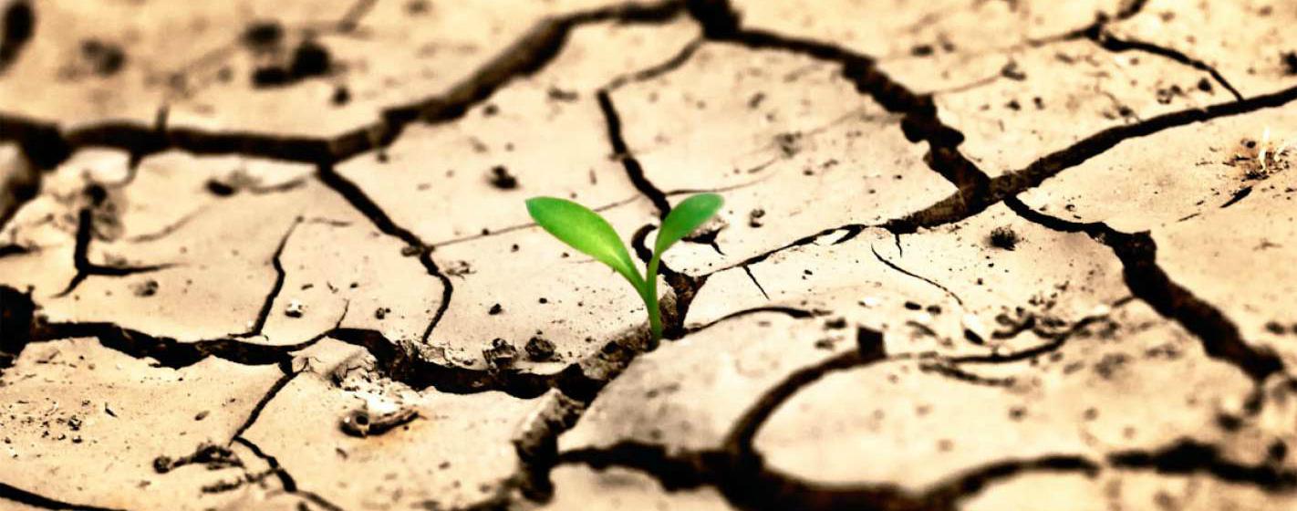 Опустынивание земель: причины, последствия, методы борьбы