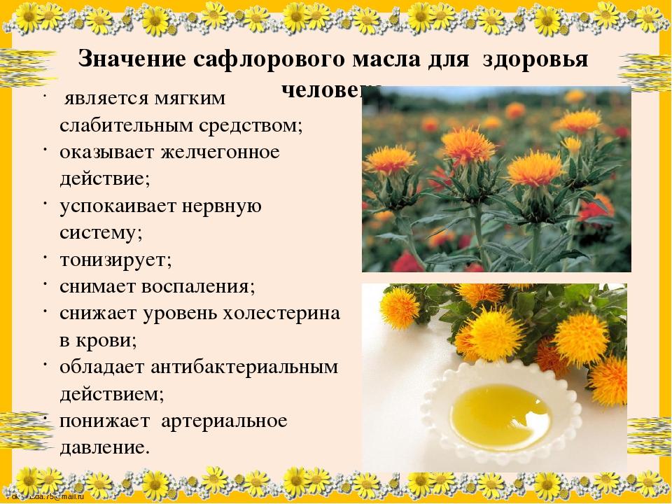 Сафлор: лечебные свойства и противопоказания, применение, виды (красильный, экстракт, масло, семена, лепестки, цветы), норма высева медоноса, переработка