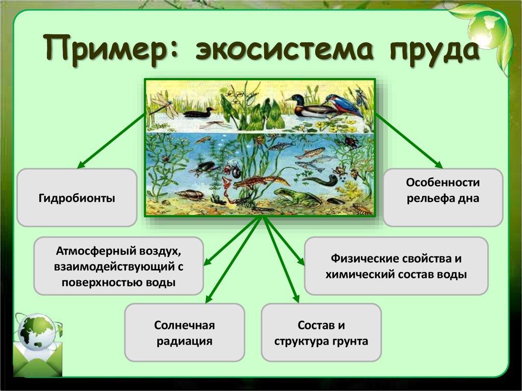 Биоценоз: характеристика, примеры искусственной и естественной классификации, структура, видовое разнообразие, экосистема, цепь, природные компоненты, примеры, видео