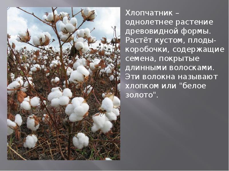 Что такое эко-текстиль и органический хлопок, в чем их преимущества? | вечные вопросы | вопрос-ответ