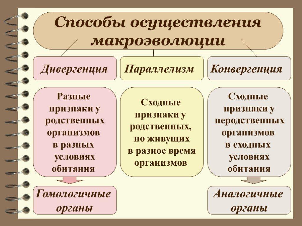 Дивергенция – что такое в биологии, математике, в трейдинге, лингвистике, социологии, географии