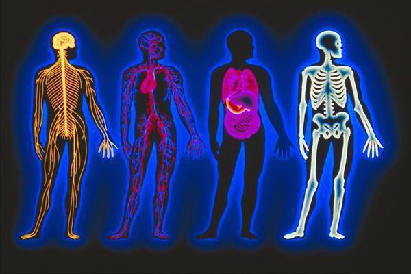 Понятие гомеостаза в разных сферах наук