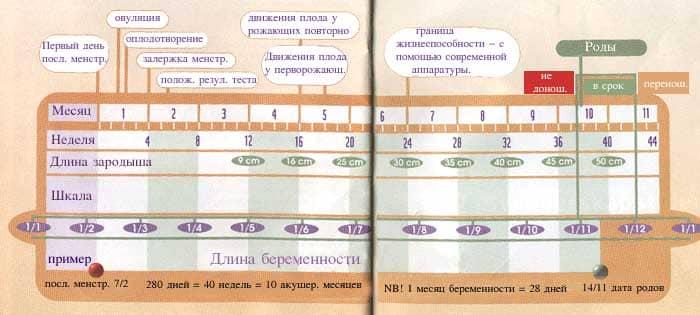 Предполагаемая дата родов (пдр): методы правильного рассчета появления малыша