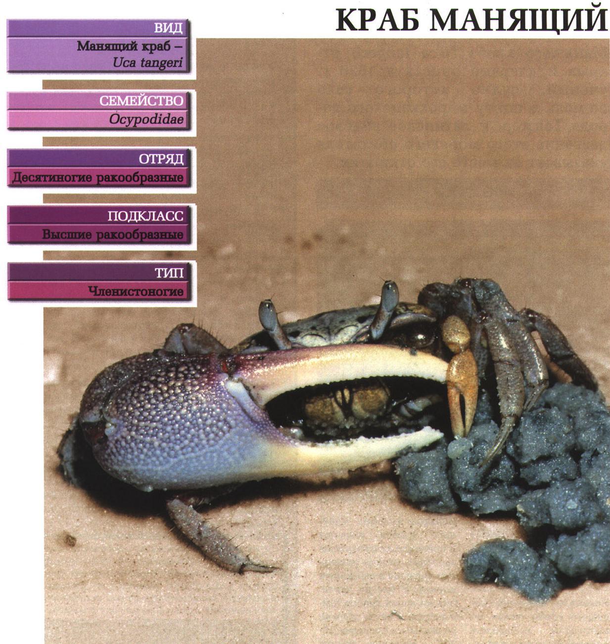 Аквариумные крабы (24 фото): нюансы содержания пресноводных и других представителей. чем кормить радужных, мангровых и крабов других видов