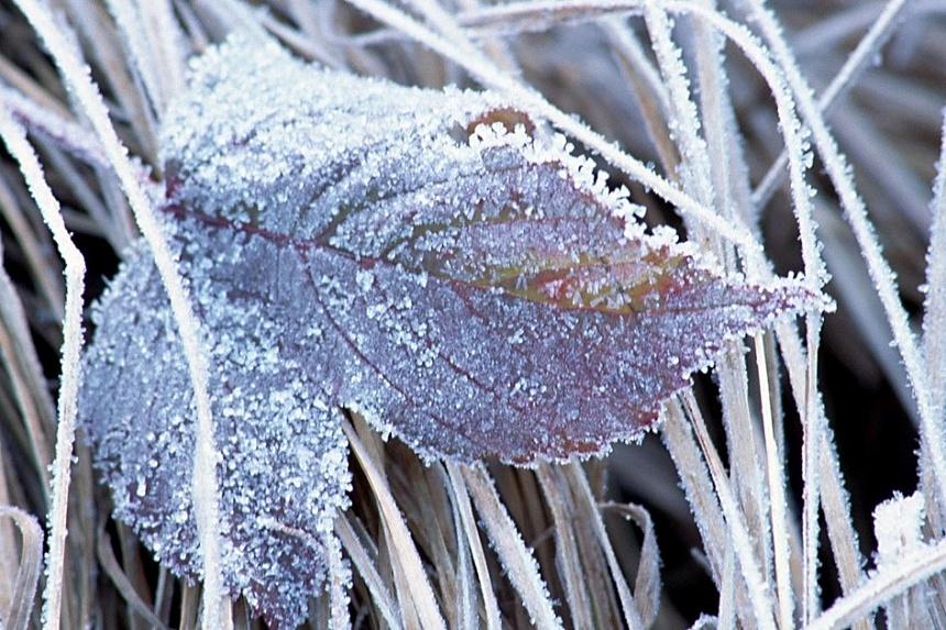 Особенности сухой заморозки, принцип действия такой заморозки