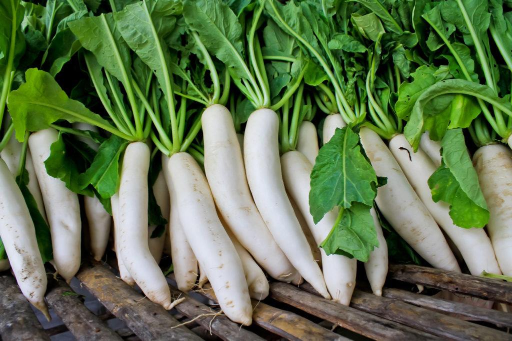 Чудо-овощ - редька дайкон! описание и свойства, сорта и специфика выращивания, а также другие особенности