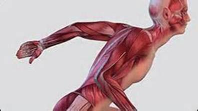 Что такое мышечное чувство? его значение