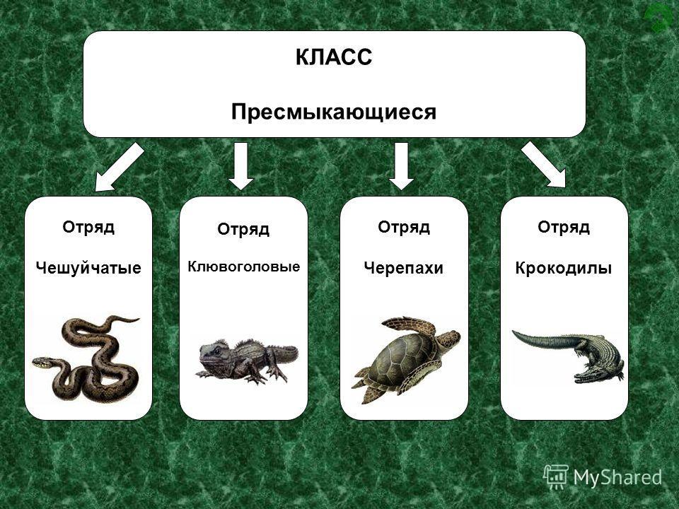 Пресмыкающиеся животные: список и особенности