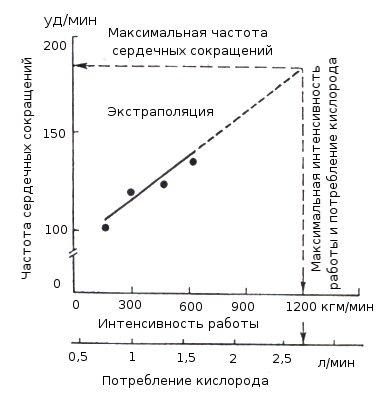Реферат: физическое здоровье человека. что такое максимально потребление кислорода? - xreferat.com - банк рефератов, сочинений, докладов, курсовых и дипломных работ