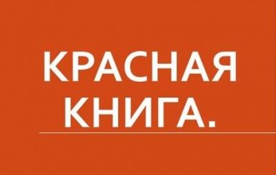 Животные красной книги россии – названия, описание, характеристика, редкие виды, фото и видео  - «как и почему»