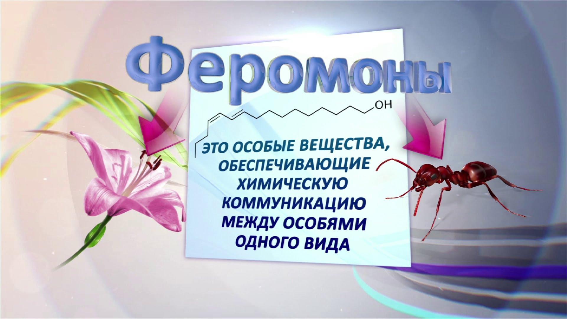 Духи с феромонами. правда или ложь? | wmj.ru