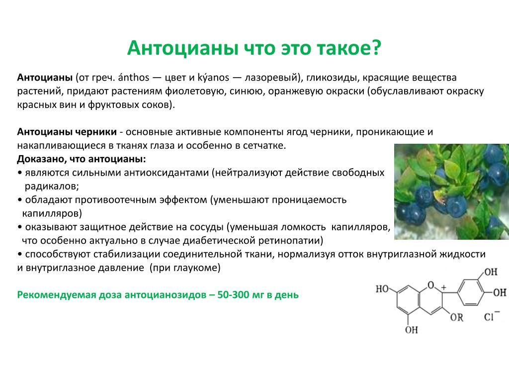 Антоцианы - в чем содержатся и каковы их свойства