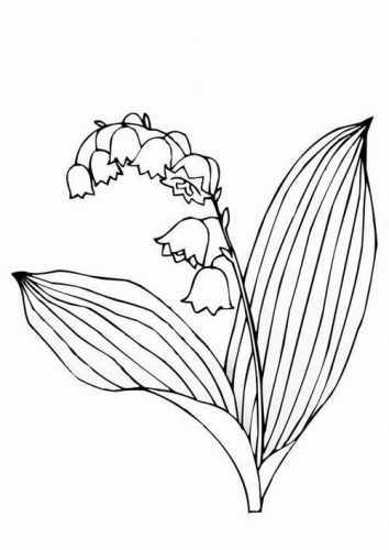 Кубышка (растение)
