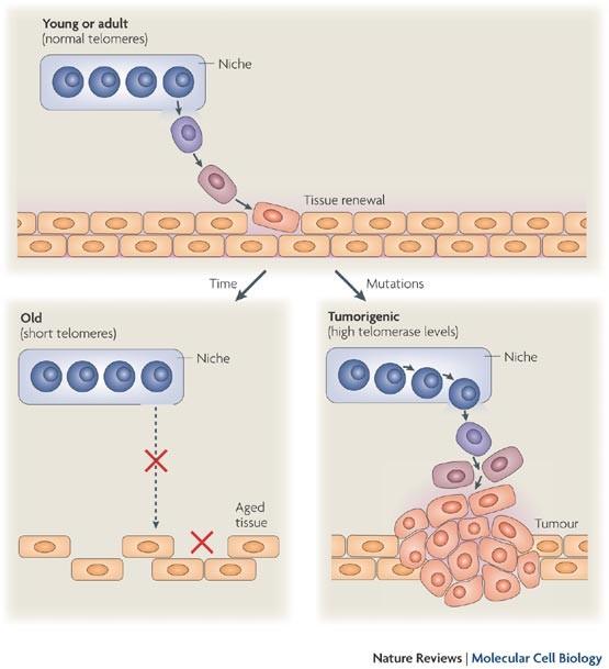 Как выявить и вылечить пролиферацию цилиндрического эпителия