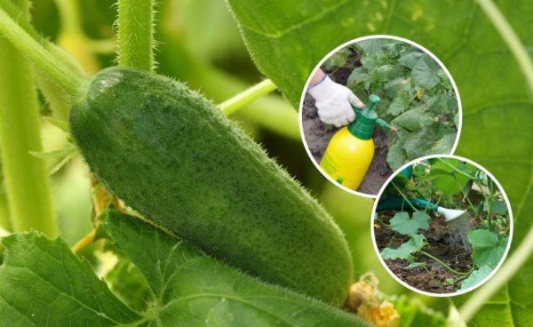 Удобрение нитрофоска - инструкция по применению на огороде весной, летом