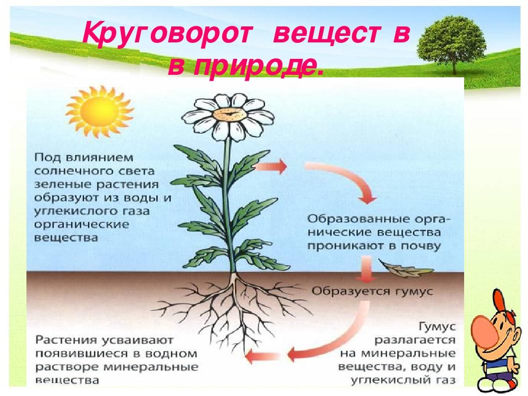 Круговорот веществ в природе: все, что нужно знать - ecobloger