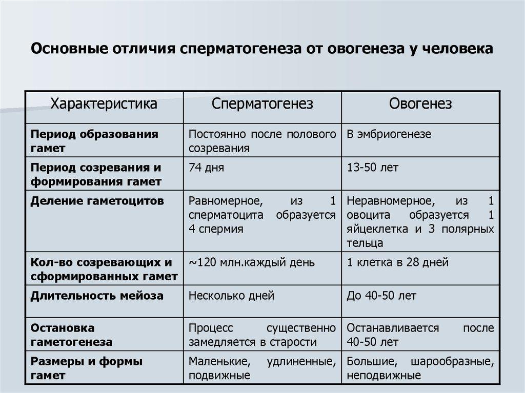 Сперматогенез и овогенез - это процессы образования и формирования половых клеток :: syl.ru