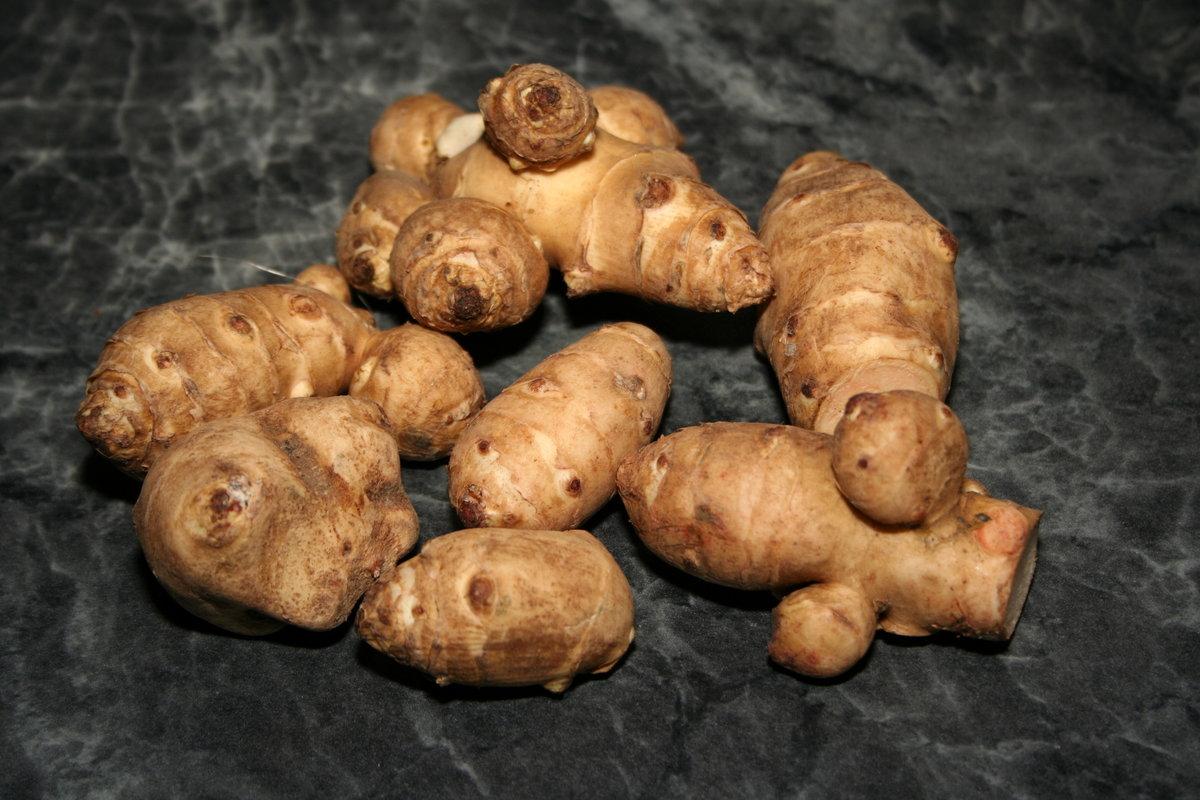 Выращивание топинамбура, его описание и полезные свойства