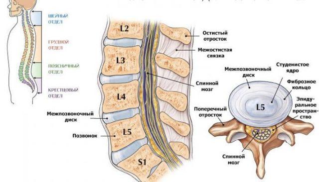 Дорсопатия — что это такое и как лечить, диагностика и лечение дорсопатии позвоночника в клинике «тибет»