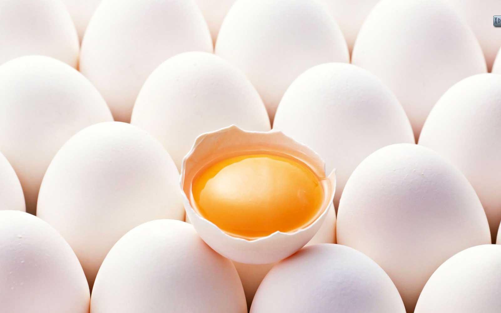 Строение яйца – 10 фактов, о которых вы и не догадывались ????????