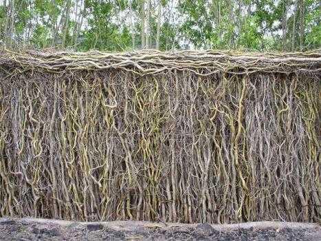 Плетень: красивые примеры в ландшафтном дизайне