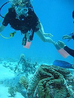 Что такое риф в океане?
