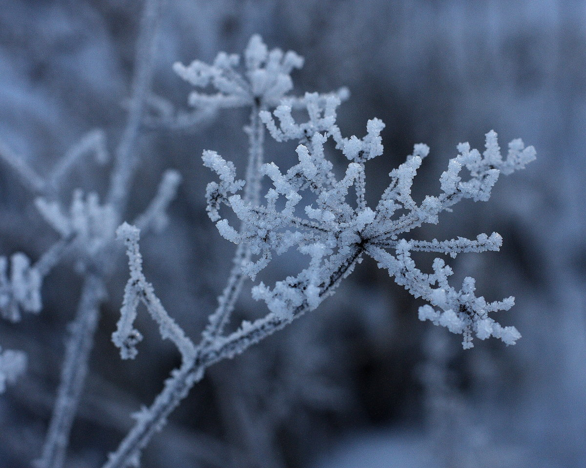 Что такое изморозь и чем она отличается от инея?