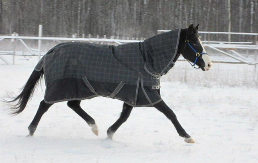 Попона для лошадей: разновидности, уход за попоной, изготовление, фото