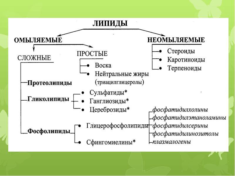 Липиды: что это такое, классификация, строение и функции