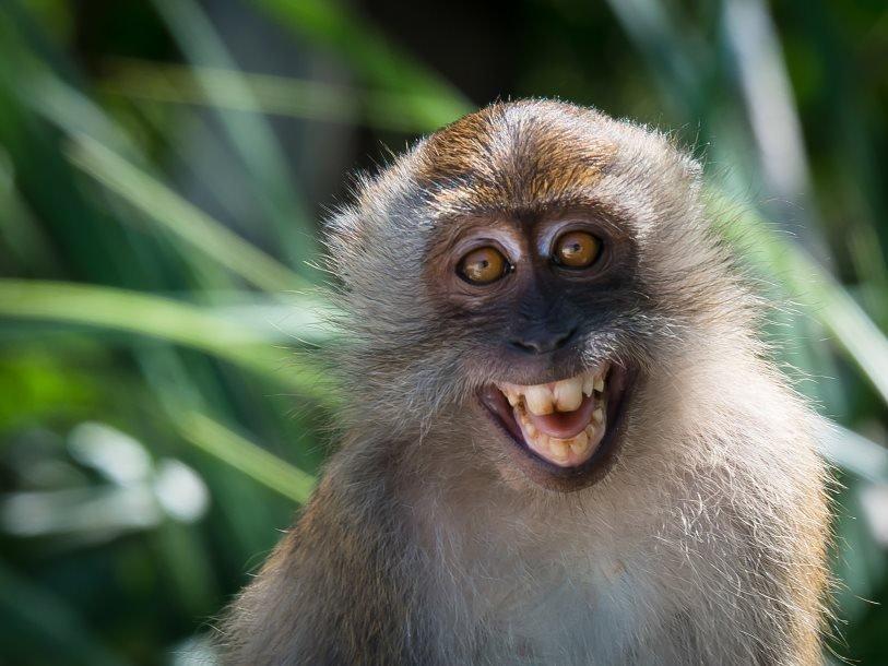 50 интересных фактов о макаках — общенет