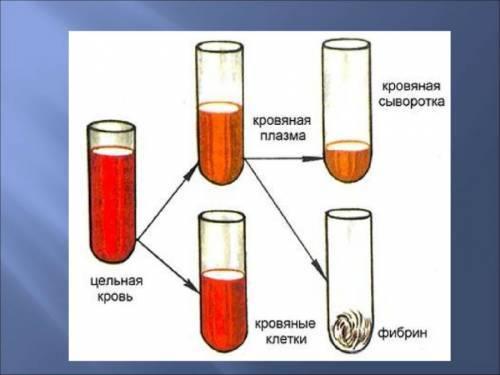 Хилез крови: что это такое, причины, симптомы, диагностика и диета