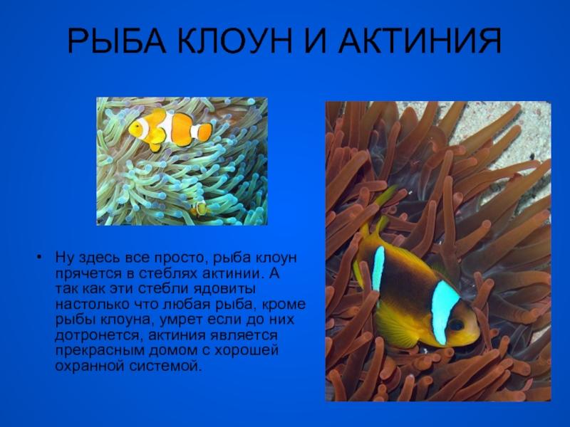 Мутуализм (биология) - mutualism (biology)