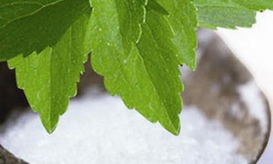 Что такое стевия: полезные и лечебные свойства